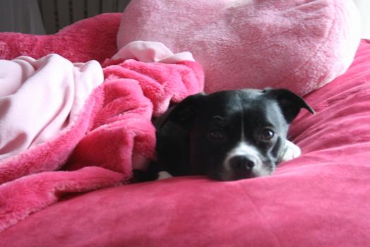 valentine puppy.jpg
