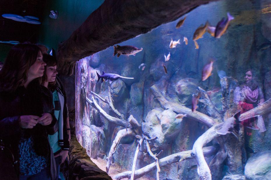via_aquarium_02.jpg