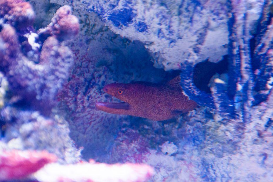 via_aquarium_07.jpg
