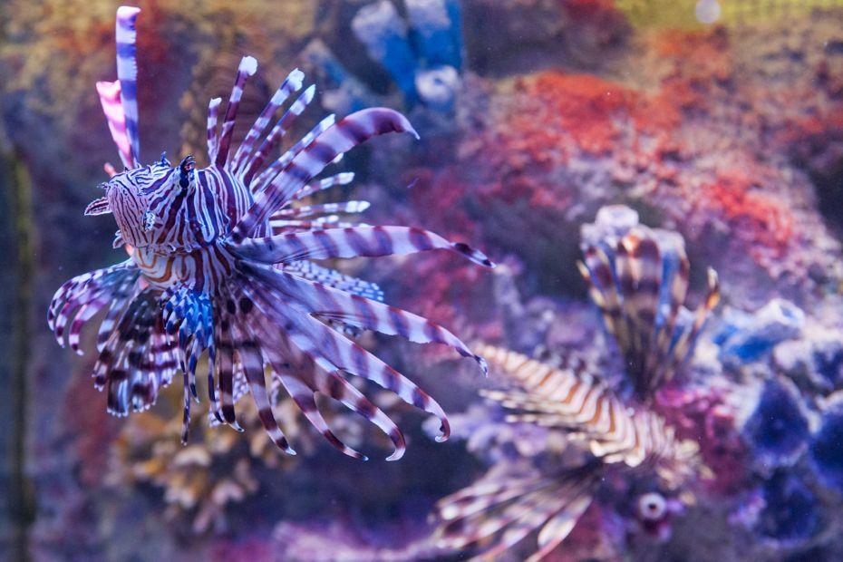 via_aquarium_09.jpg