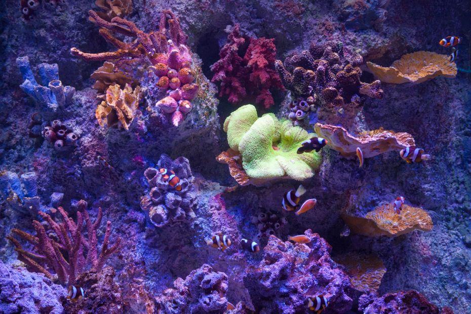 via_aquarium_10.jpg
