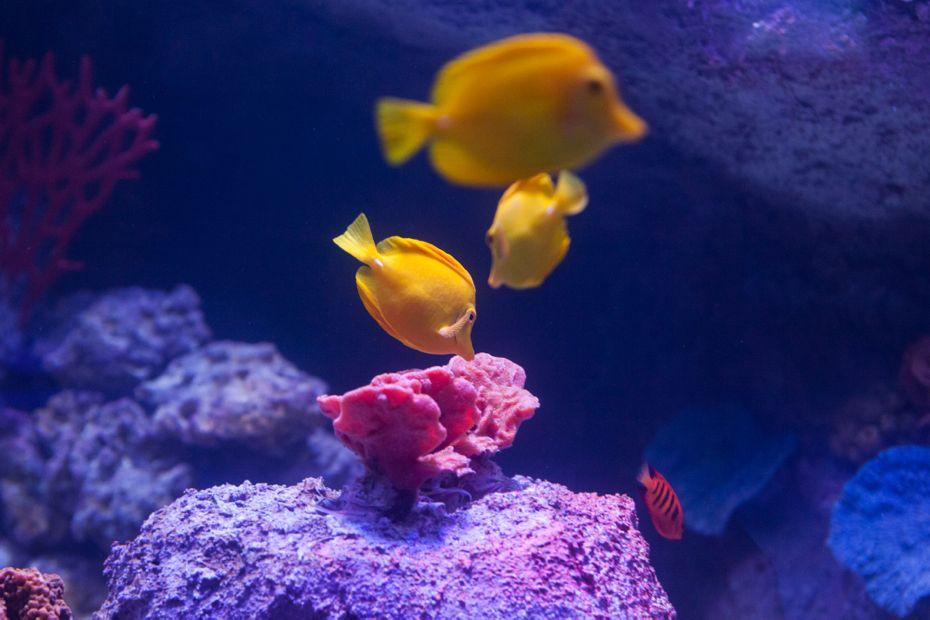 via_aquarium_14.jpg
