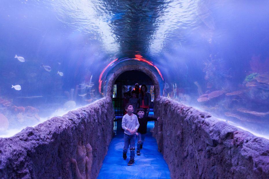 via_aquarium_15.jpg