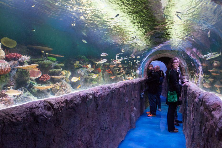 via_aquarium_16.jpg