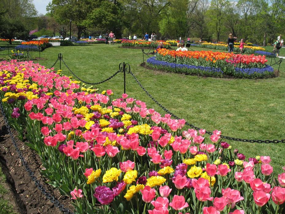 washington_park_tulips_2012-04-20.jpg