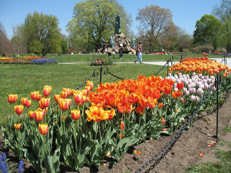 washington_park_tulips_2012-04-20_4.jpg
