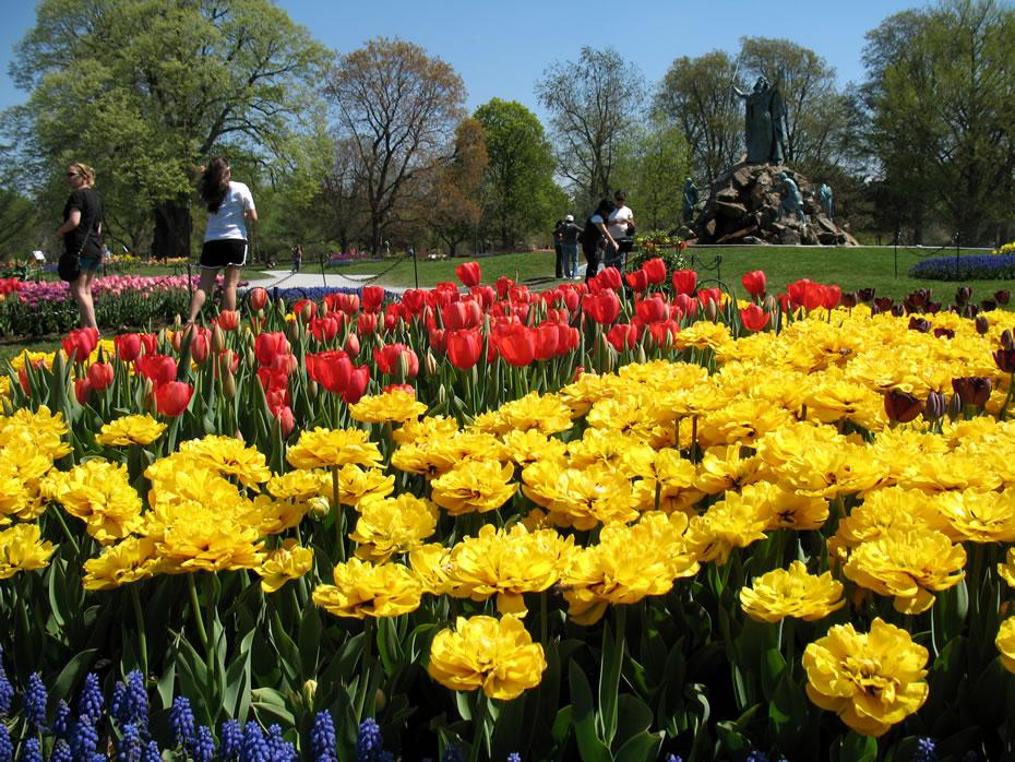 washington park tulips 2012-04-20 7