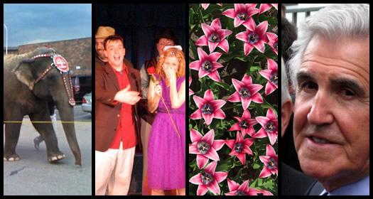 week review 2010-05-08