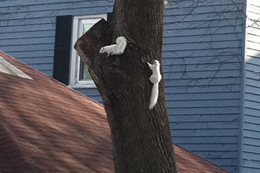white squirrels delaware ave albany