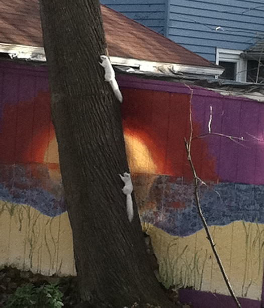 white squirrels delaware ave albany tall