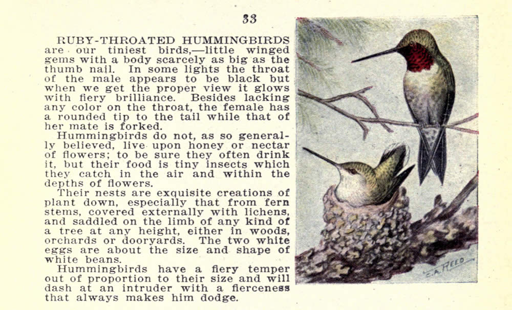 wild_birds_of_new_york_hummingbird.jpg