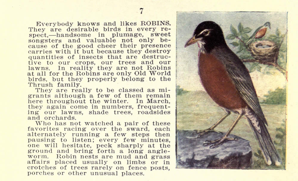 wild_birds_of_new_york_robin.jpg