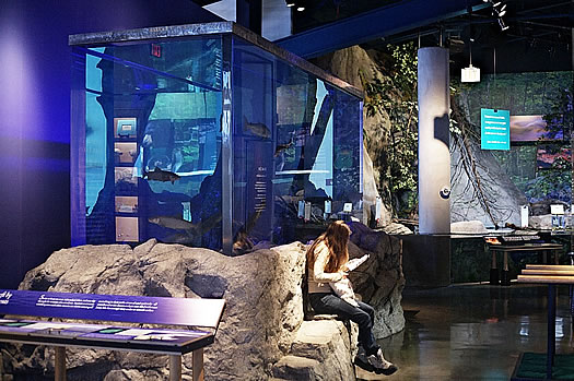 wild center interior